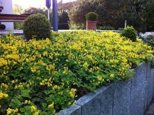 Hausgartenbepflanzung (2)